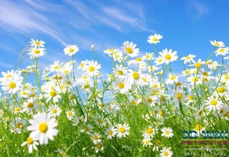 Tranh dán tường hoa lá DHL2070