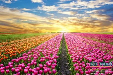 Tranh dán tường hoa lá DHL2078